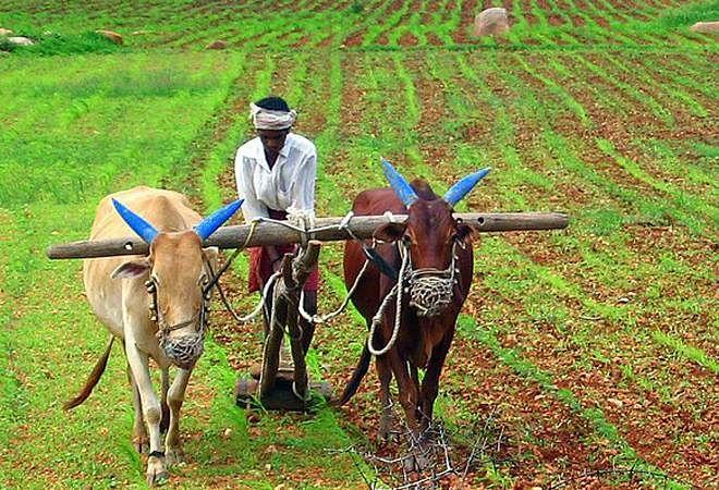 खेती कर किसानों के लिए प्रेरणास्रोत बने सेवानिवृत्त शिक्षक, हो रही है बंपर कमाई