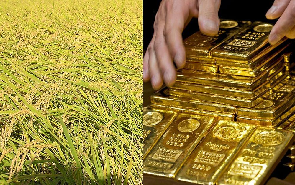 पश्चिम बंगाल में बांग्लादेश सीमा के पास धान के खेत में मिले 21 किलोग्राम सोना, सात गिरफ्तार