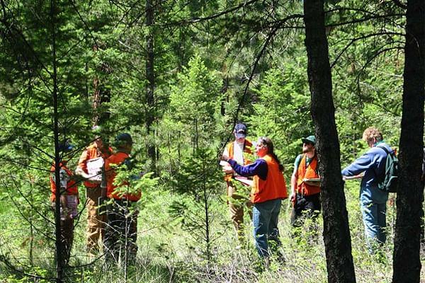 298 एकड़ वन भूमि बिक्री की जांच 10 साल बाद भी नहीं, दस्तावेज भी गायब