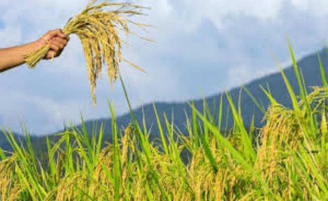 राज्य के किसानों को मिलेगा बिल मिलिंडा गेट्स फाउंडेशन का सहारा
