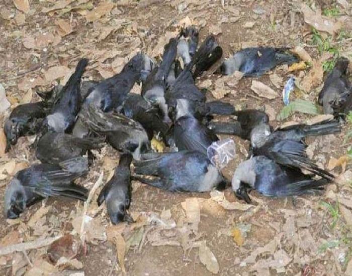 कोरोना के बीच एक और जानलेवा वायरस की दस्तक,  खौफ में   बिहार