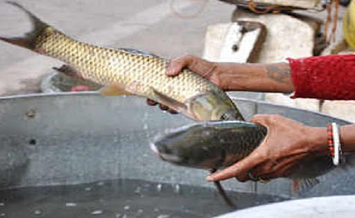 Bird Hit : नियम - पांच किलोमीटर के दायरे में मांस-मछली न बिके, हकीकत- 50 मीटर दूर ही सज रहा बाजार