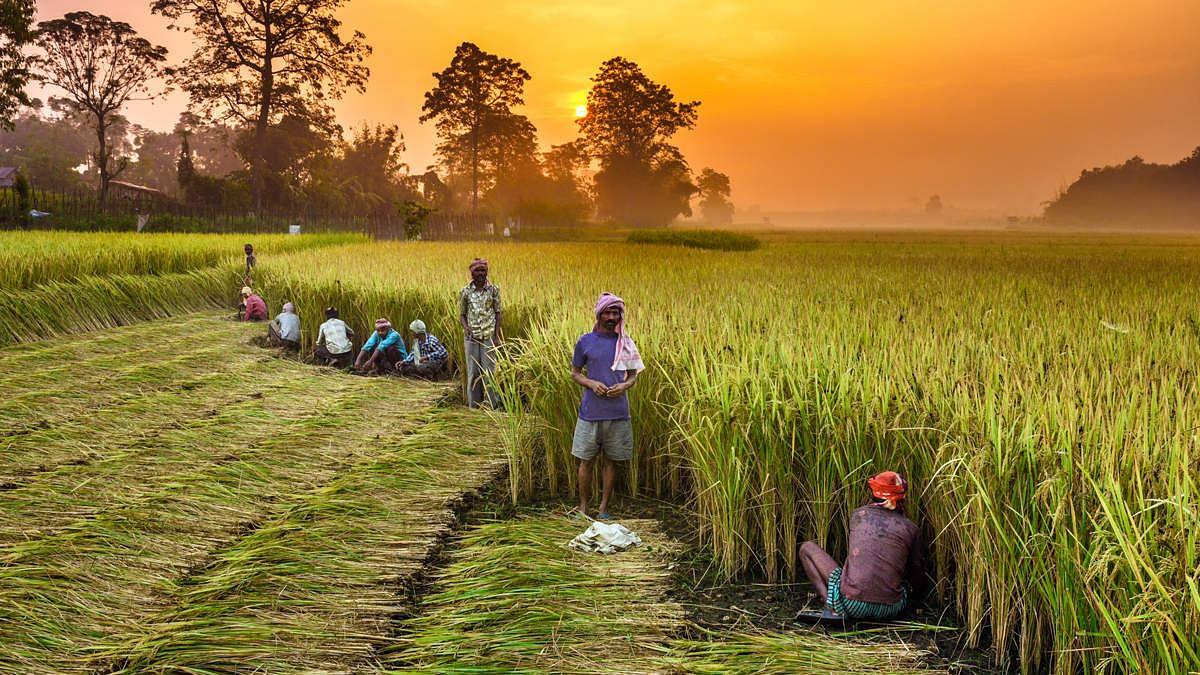 कृषि और कृषि से जुड़े क्षेत्रों के बीच बेहतर तालमेल और किसानों की आय दोगुनी करने को लेकर नाबार्ड और एपीडा ने किये समझौते