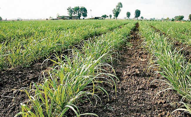 झारखंड में मुख्यमंत्री आशीर्वाद योजना बंद, अगले साल से नहीं कराया जायेगा फसल बीमा
