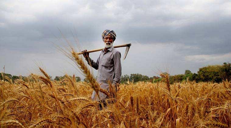 जूट बोरा के अभाव में नहीं हो रही धान की खरीदारी, अब तक इतने किसान ही बेच पाए हैं सरकारी मूल्य पर धान