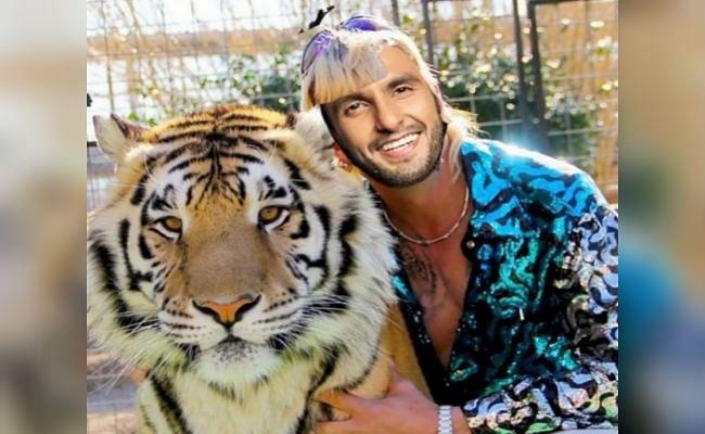 Ranveer Singh ने बाघ के साथ शेयर की एडिटेड फोटो, Deepika Padukone ने कहा - ज्यादातर वक्त ऐसे ही तो होते हो...