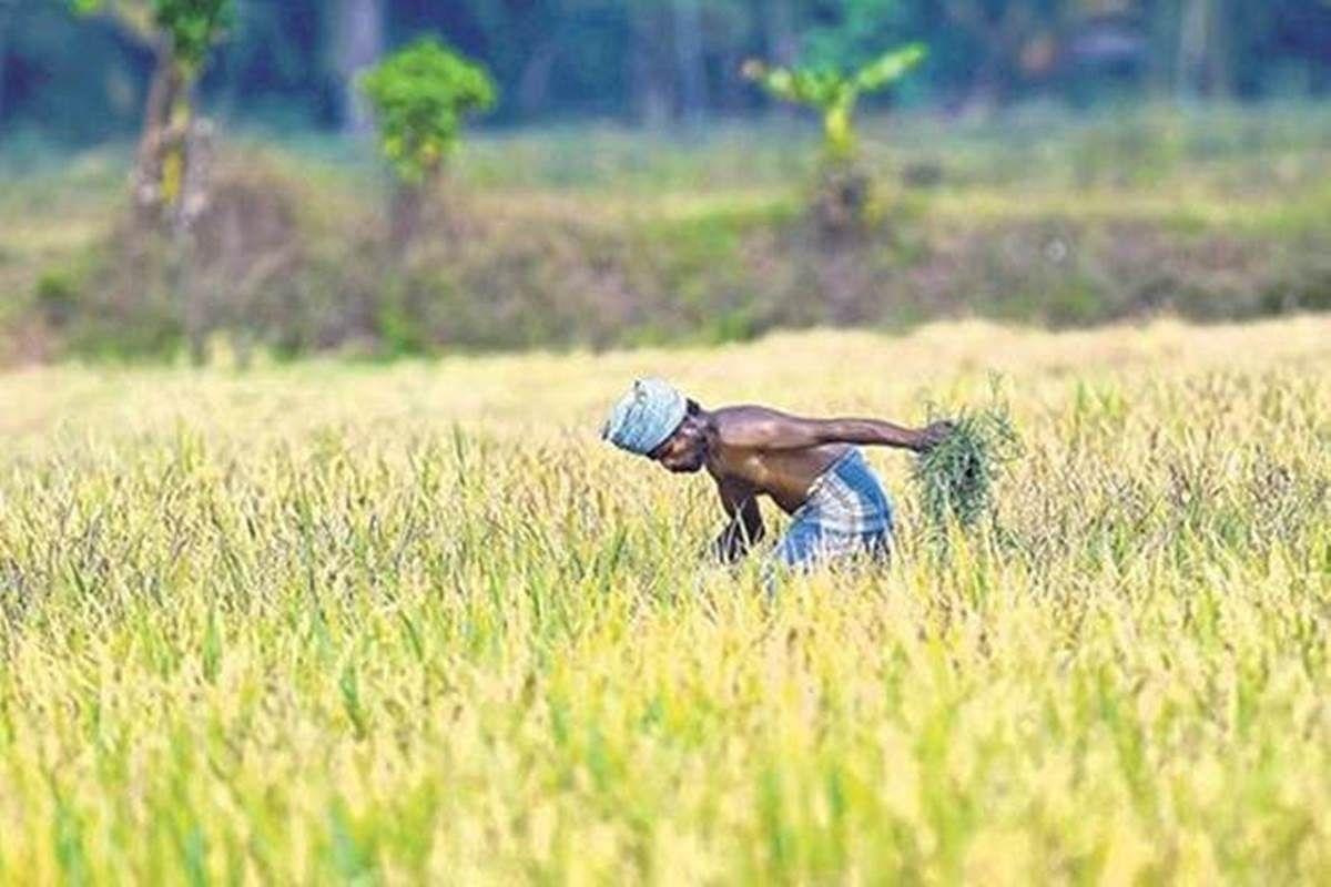 पीएम किसान सम्मान योजना :  किसानों के बीच बंट चुके हैं 1000 करोड़, 16 लाख से अधिक किसानों को मिल चुका है लाभ