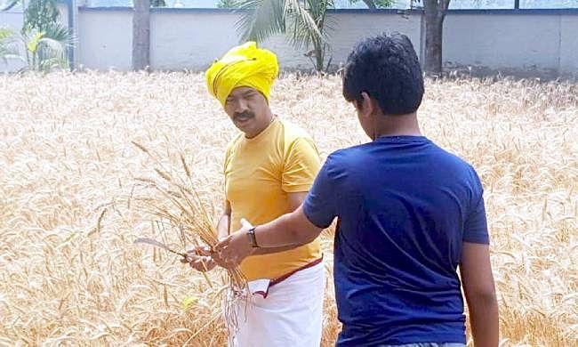 आयुक्त बने किसान, गेहूं की फसल काट कर किसानों को दिया संदेश, 'किसान ही अन्नदाता'