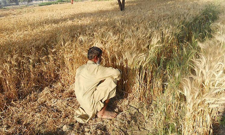 बिहार में कोरोना संक्रमण के बढ़ते प्रकोप के चलते किसानों का एक दाना भी नहीं ले पाये पैक्स, अधिकतर क्रय केंद्र बंद