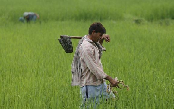 खेत-खलिहानों से विकास की राह