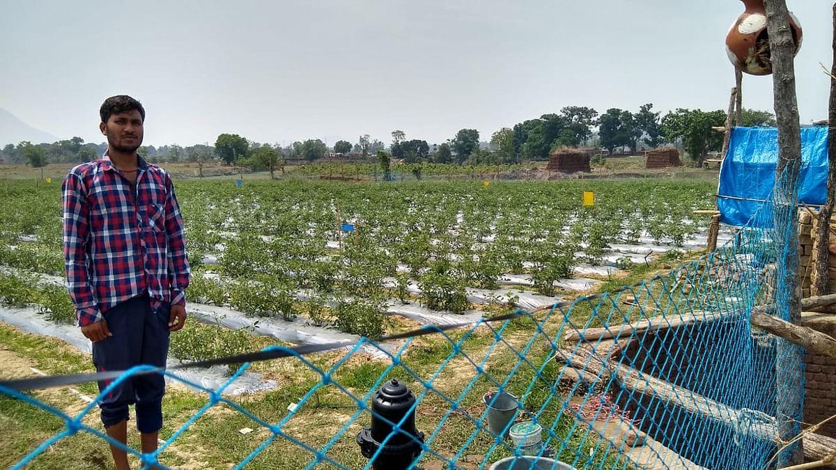 उग्रवाद प्रभावित झुमरा पहाड़ की तलहटी में संतोष ने लायी हरियाली, बंजर भूमि में उगाये टमाटर