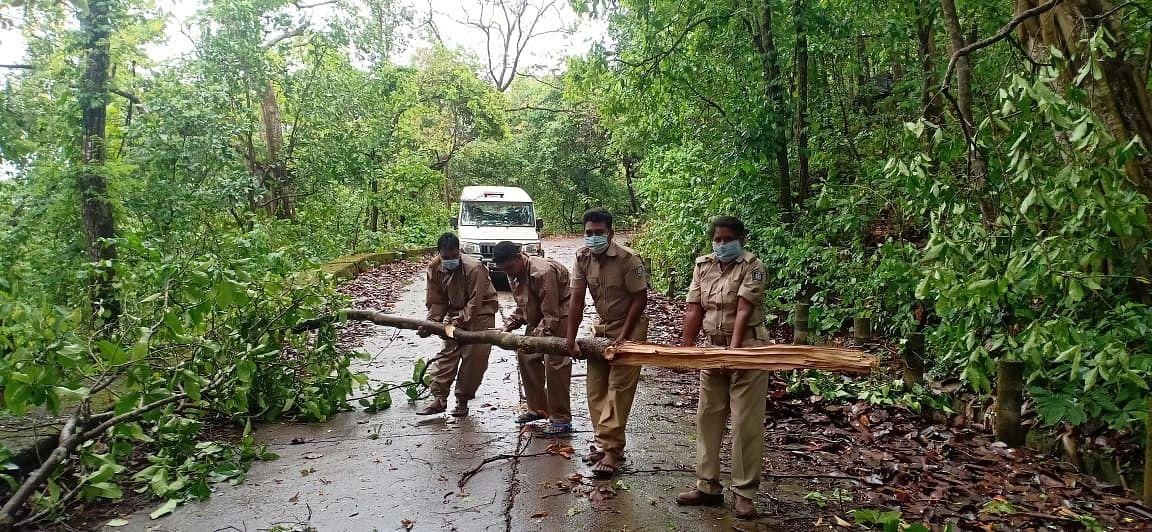 मार्ग में ही कई जगहों पर पेड़ टूट कर गिर गए. जिस वजह से राहगीरों को काफी परेशानी का सामना करने पड़ा.