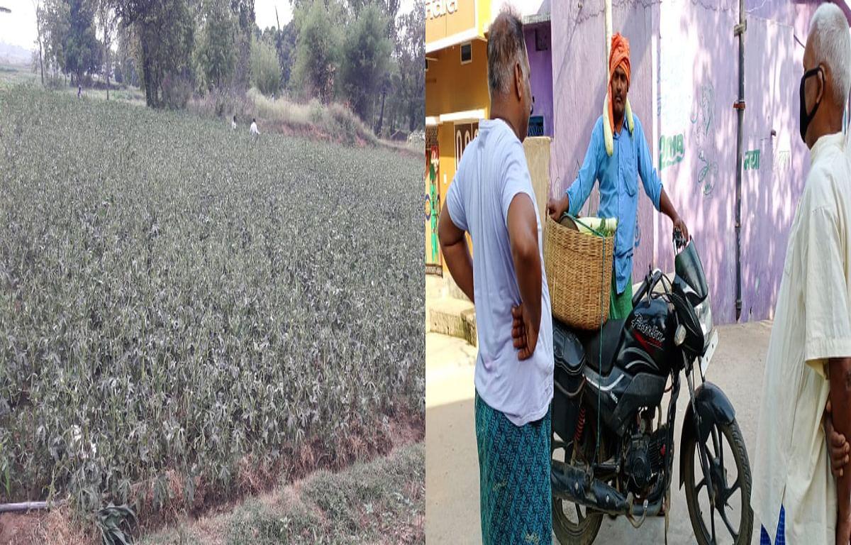 Lockdown effect : पहले खेतों से ही बिक जाती थी सब्जियां, अब गलियों में घूम- घूम कर बेचने को मजबूर किसान