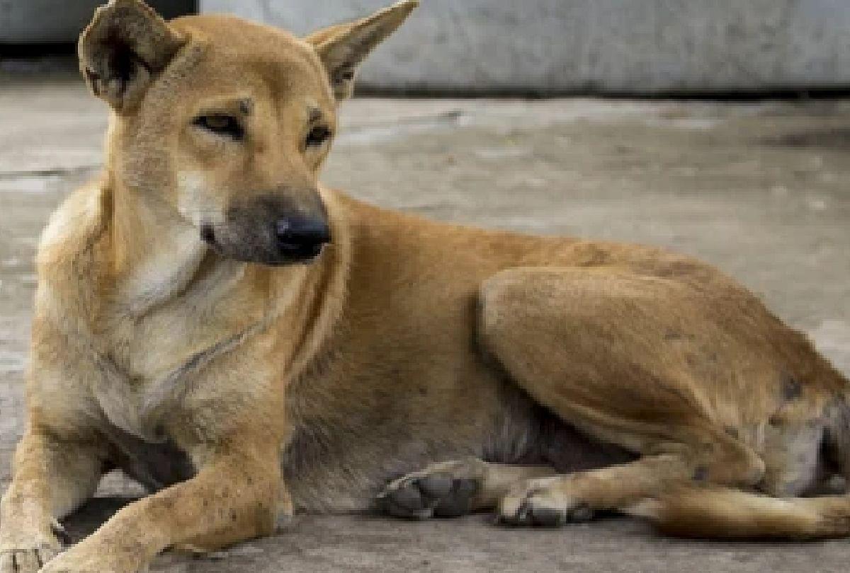 मनुष्य में कोविड-19 का पता लगाने के लिए किया जा सकता है कुत्तों का इस्तेमाल