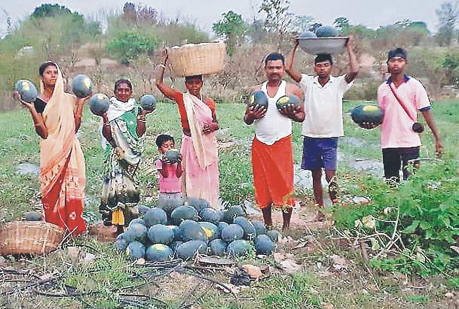 हौसले को सलाम : रामगढ़ के गिद्दी में एक एकड़ बंजर भूमि पर खेती कर उगाये 110 क्विंटल तरबूज