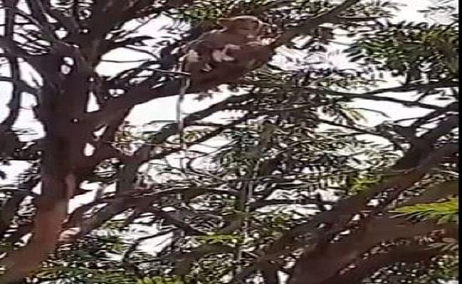 कोरोना टेस्ट सैंपल लेकर अस्पताल से भाग गया बंदर, वायरल हो रहा वीडियो