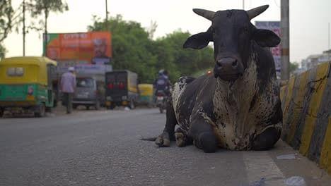 केरल में हथिनी फिर हिमाचल में गर्भवती गाय को खिलाया विस्फोटक, मालिक ने वायरल किया विडियो