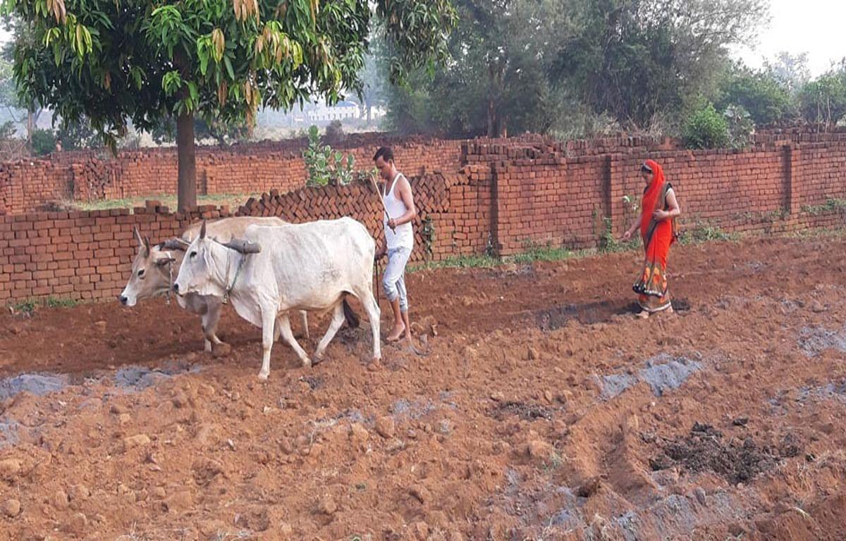 खेतों की जुताई में जुटे किसान, बारिश के साथ खरीफ फसल की बुवाई शुरू