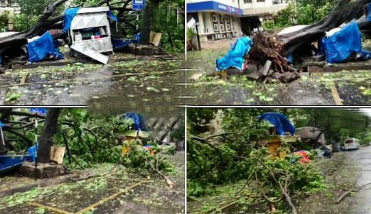 Cyclone Nisarga Live Updates, Video, Photos : मुंबई तट से टकराते ही चक्रवाती तूफान 'निसर्ग' का शुरू हुआ तांडव, तेज हवाओं से छतें उड़ी, कई पेड़ गिरे