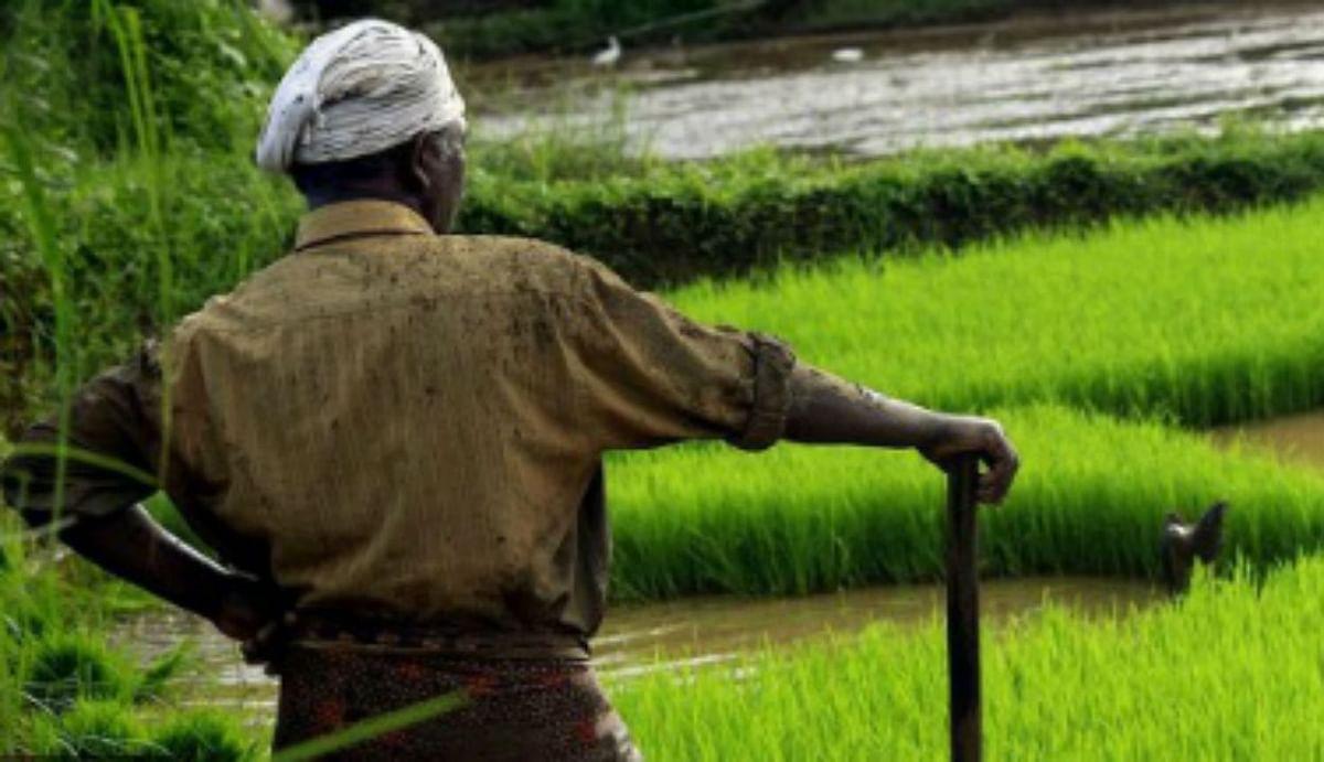 सरकार ने 53 रुपये प्रति क्विंटल बढ़ाए धान का एमएसपी और उड़द पर 300, जानिए अगले साल किसानों को कितनी मिलेगी कीमत...?