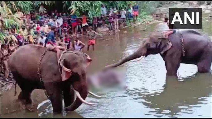 गर्भवती मादा हाथी को खिला दिया पटाखों से भरा अनानास, मुंह में फटा, मौत, FIR दर्ज
