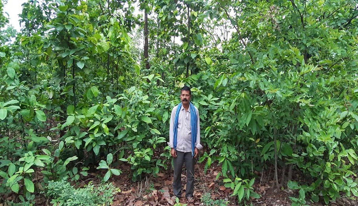पर्यावरण संरक्षण : तीन दशक से जंगल बचाने में जुटे हैं रामगढ़ के वीरू महतो