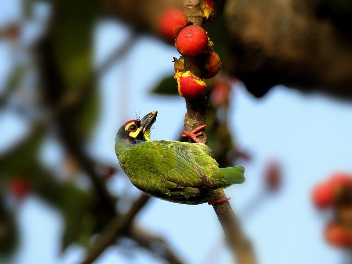 लॉकडाउन से प्रकृति को मिली संजीवनी, पर्यावरण में आया सुधार, तो दिखने लगे दुर्लभ पक्षी
