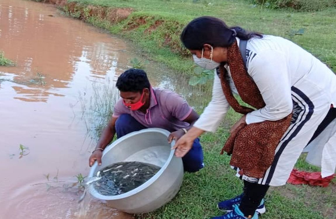 बरसात से पहले मछली पालन के लिए खुदवाएं तालाब, सरकार देगी अनुदान, जानिये कैसे करना है आवेदन