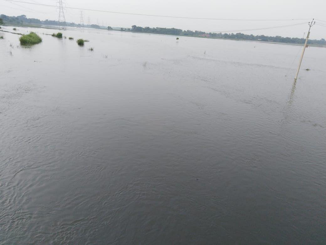 सीतामढ़ी के बोखड़ा प्रखंड की सभी पंचायतों के किसानों के अरमान पर फिरा पानी. शत-प्रतिशत फसल नष्ट.