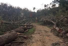 अधिकारी ने माफिया से मिल बिकवा दी वनभूमि