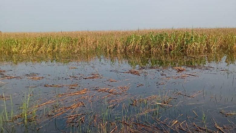 सोन नहर में अचानक पानी छोड़ने से खेत-खलिहानों में घुसा पानी, फसल बर्बाद