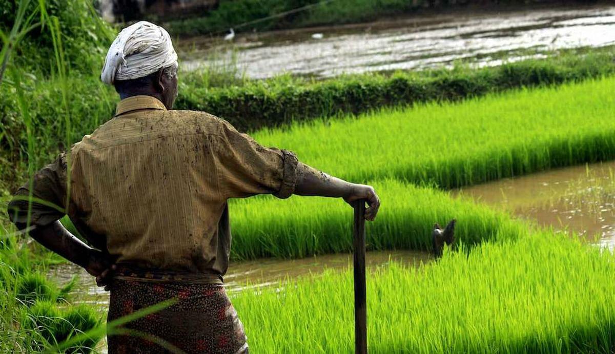 कोरोना काल में आर्थिक सुस्ती से उबार सकता है ग्रामीण भारत, एग्रीकल्चर जीडीपी ग्रोथ ने तोड़ा पिछले पांच साल का रिकॉर्ड