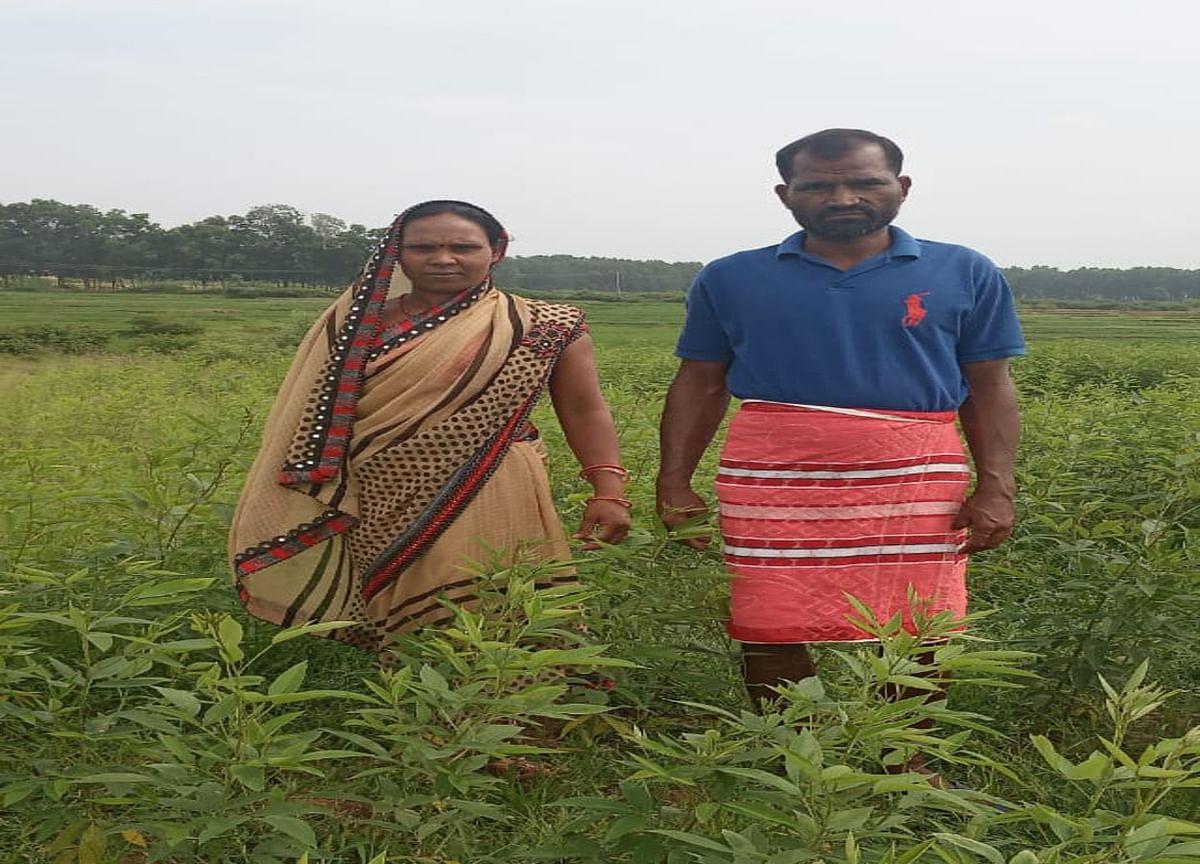 Crops in jharkhand : झारखंड में किसानों को मौसम ने दिया साथ, ठंड कम पड़ने से तेलहन और दलहन की हुई अच्छी खेती