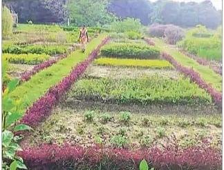 बिहार का ये गांव देगा 'आरोग्य' का वरदान, किसानों को मिल रही खास ट्रेनिंग
