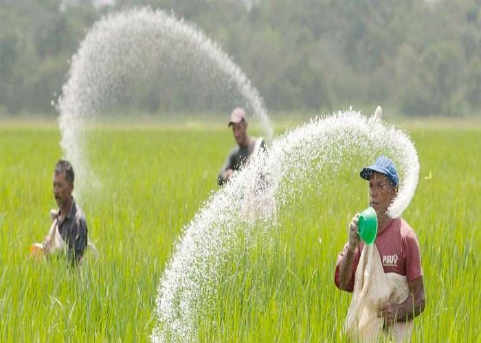 लूट का बाजार : किसानों को 266 रुपये की यूरिया मिल रही 360 में, होलसेलर कर रहे मनमानी