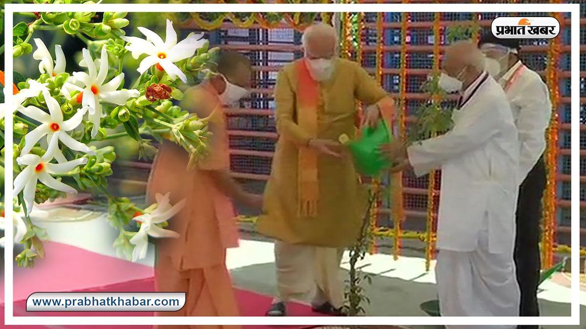अनोखे गुणों के लिए जाना जाता है पारिजात का पौधा, जिसे पीएम मोदी ने अयोध्या में रोपा, जानें