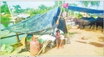 सांप व सियार से बचने को नाव पर शरण लेने को मजबूर हैं लोग
