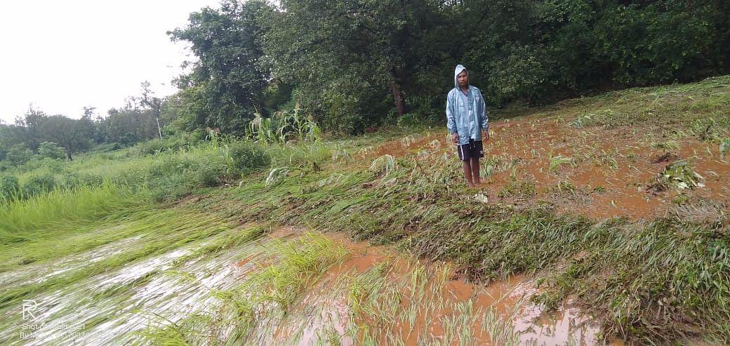 दुबिल के किसानों की खेती को लाल पानी ने किया बर्बाद.