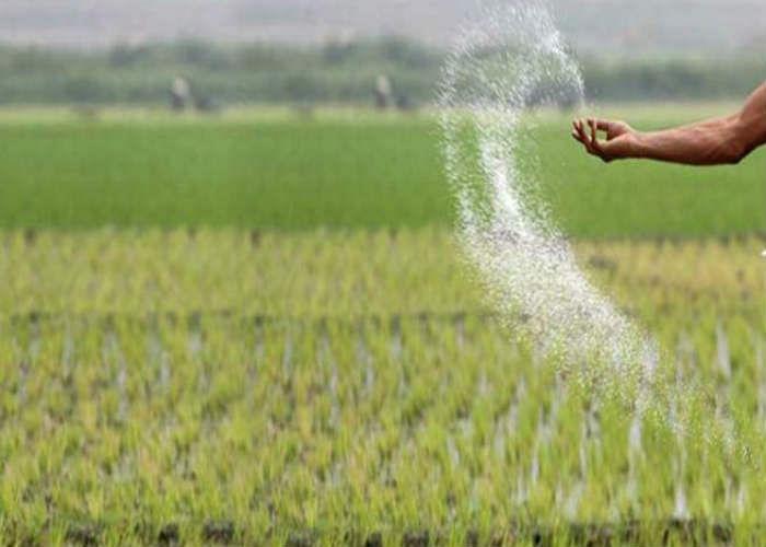 Jharkhand News : लॉकडाउन से हलकान किसानों पर नई आफत, 266 रुपये का यूरिया मिल रहा 360 में, पढ़ें झारखंड की टॉप-5 खबरें