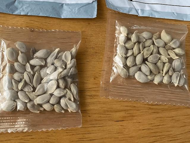 Seed Parcels: विदेशों से आ रहे रहस्यमय बीज पार्सल, केंद्र सरकार ने राज्यों को जारी किया अलर्ट