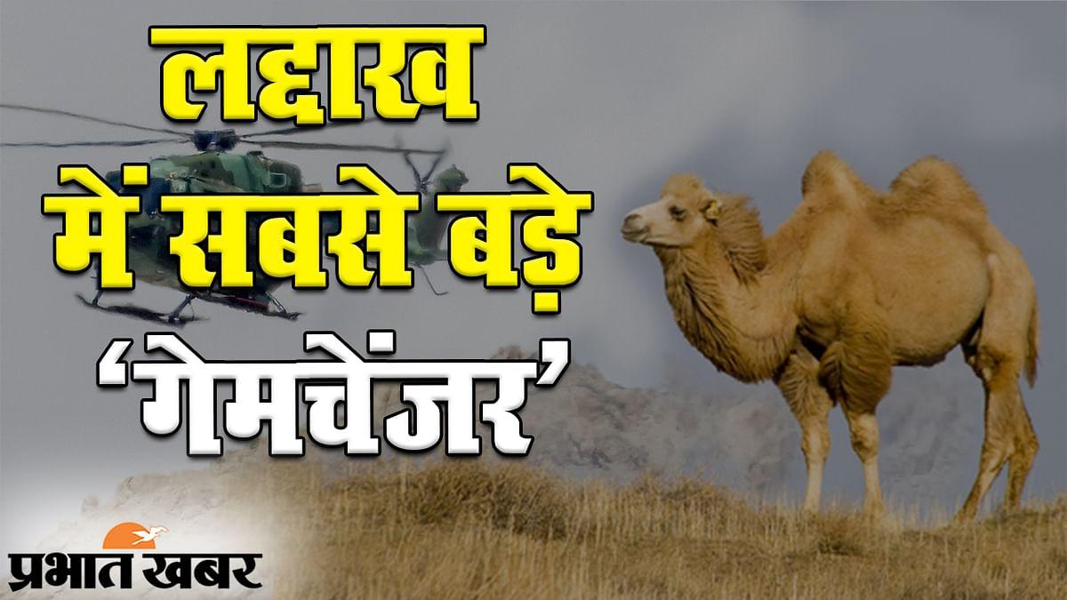 भारत-चीन तनाव: लद्दाख में बैक्ट्रियन ऊंट कैसे सिखाएंगे ड्रैगन को सबक?