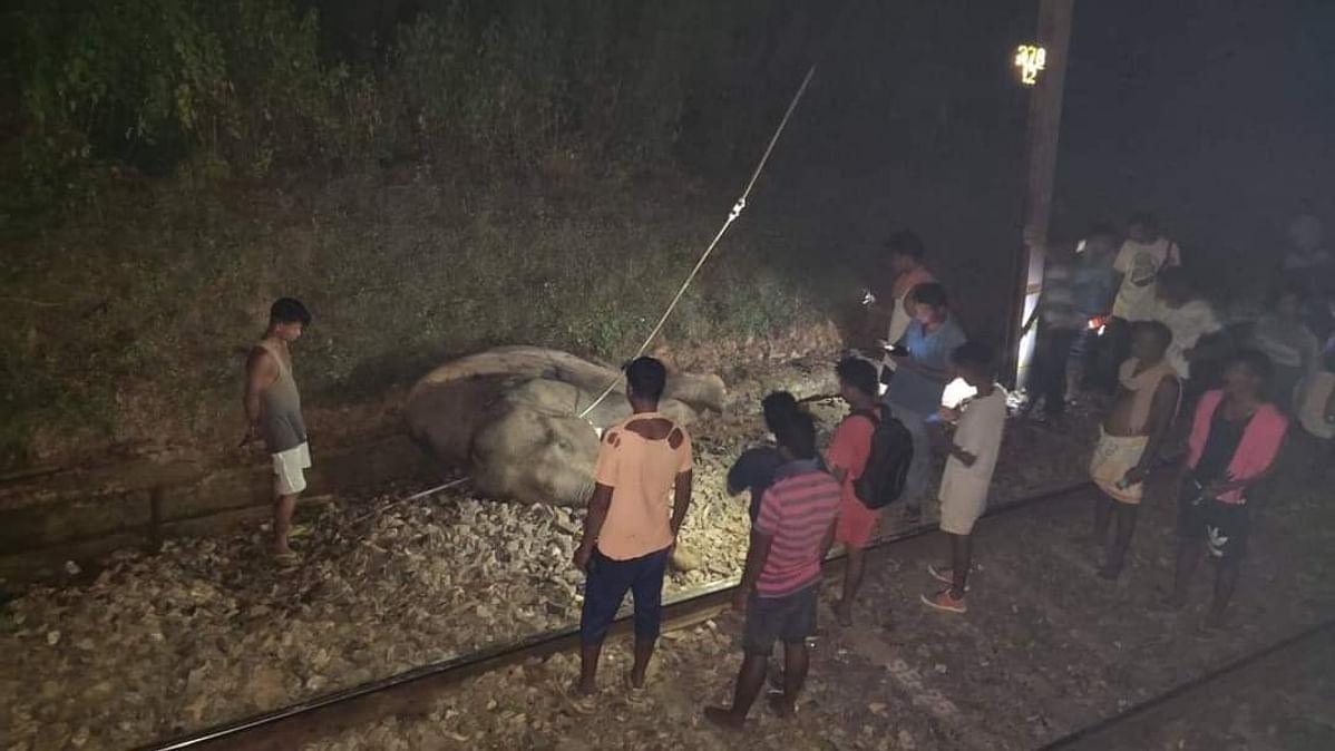 झारखंड में ट्रेन से कटकर हाथी की मौत, एलीफैंट जोन में हादसे के बाद रेलगाड़ियों का परिचालन बंद