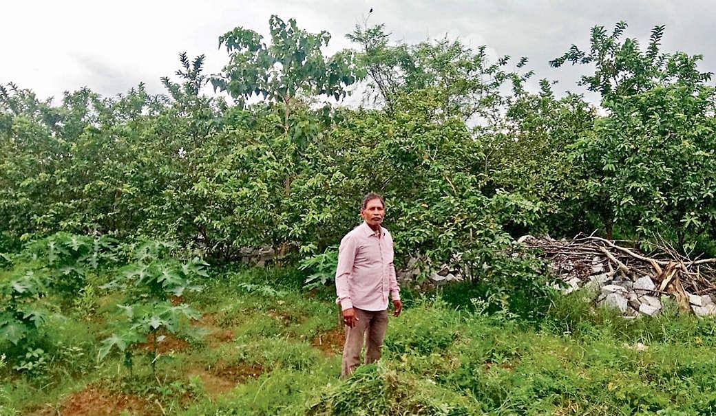 10 एकड़ में फैली साधुचरण की खेती