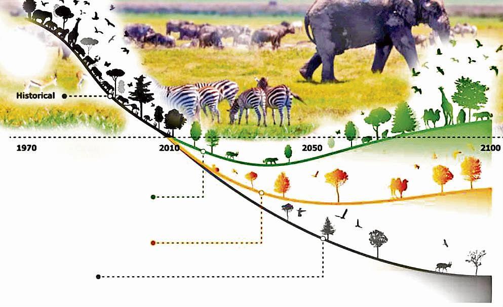 Living Planet Report 2020 : संकट में है जीवों का अस्तित्व, पांच दशक में 68 प्रतिशत जैव-विविधता नष्ट