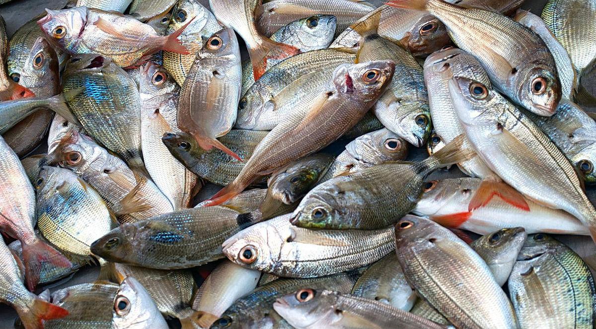 धनबाद के मछली बाजार पर गैंग्स की गिद्धदृष्टि, खौफ में कारोबारी, पुलिस नकेल लगाये नहीं तो बिगड़ सकता है माहौल
