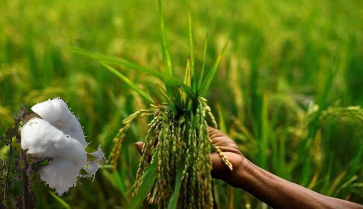 कोरोना काल में ग्रामीण भारत ने दिखायी ताकत, इस साल के मानसून में बंपर हुई खरीफ फसलों की बुआई