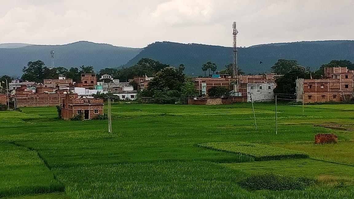 Jharkhand News : धान की फसलों में लगी बीमारी से किसान चिंतित, आर्थिक नुकसान का सता रहा भय