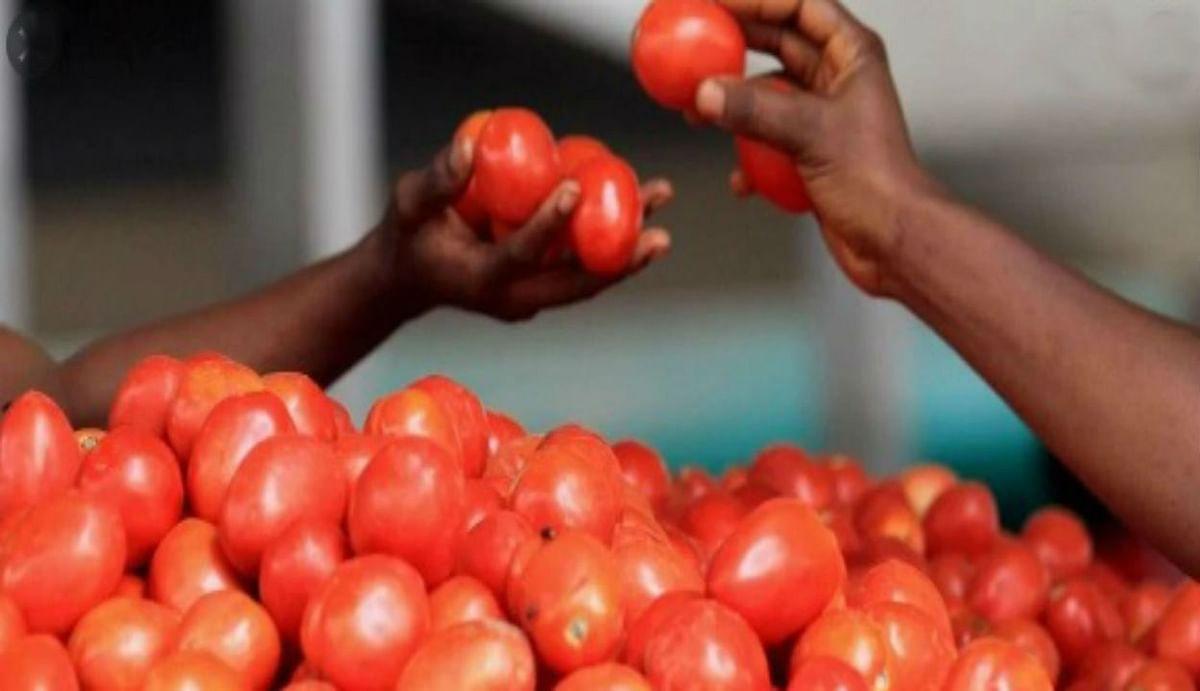 आलू-प्याज के बाद अब ताव-ताव में आसमान छूने लगा टमाटर, जानिए सब्जी मंडियों में आज रही कीमत...