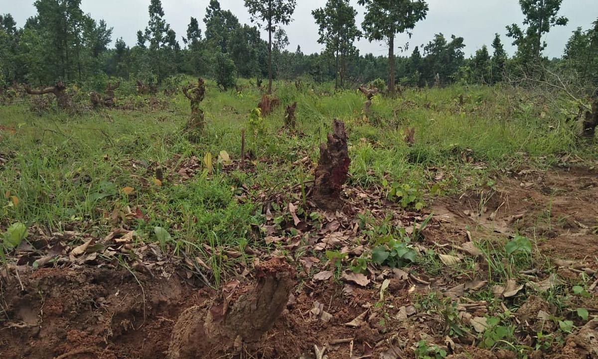 इचाक में सैकड़ों एकड़ जंगल में लगे पेड़ को काटकर बनाया खेत, विरोध में उतरे ग्रामीण