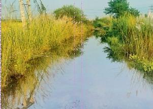 वैशाली जिले के देसरी-मटिया पथ पर चढ़ा बाढ़ का पानी, परिचान ठप, धान की फसल बर्बाद